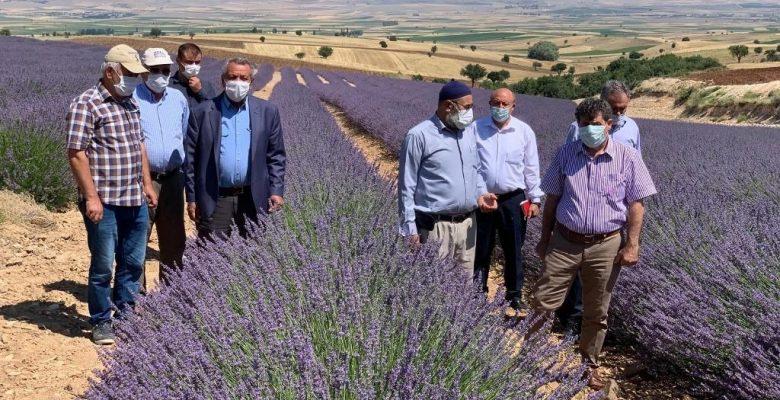 Kaymakam Eflatun Can Tortop Kızılca Köyü Lavanta Bahçesini Ziyaret Etti