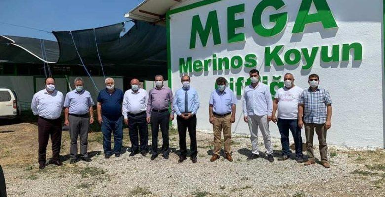 Mega Merinos Koyun  Çiftliği'ne ziyaret