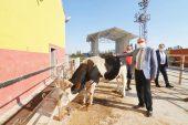 Başkan Mustafa Çöl Mezbaha'da  denetlemelerde bulundu