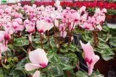 TBMM'ye Bin 500  çiçek gönderildi