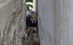 İki bina arasına sıkışan köpeği itfaiye kurtardı