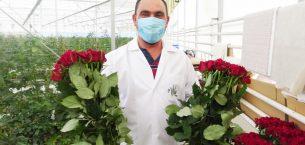 """Jeotermal serada yetiştirilen güllerde """"Sevgililer Günü"""" hasatı yapıldı"""