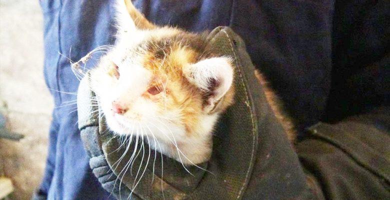 Apartman Boşluğuna  düşen kedi kurtarıldı