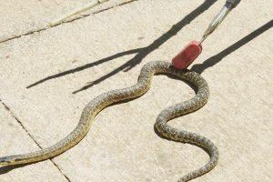 Okul bahçesinde depoya giren yılanı itfaiye ekipleri çıkardı